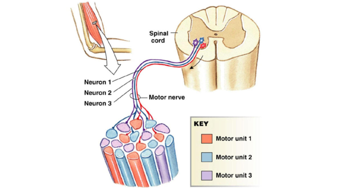 the causes symptoms and spread of amytrophic lateral sclerosis als