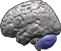 AS n12 Figure 4 cervelet